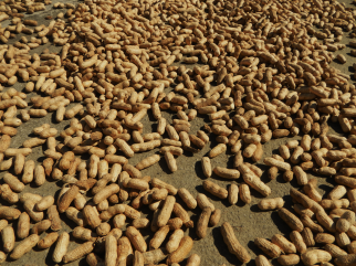 Locally Grown Valencia Peanuts